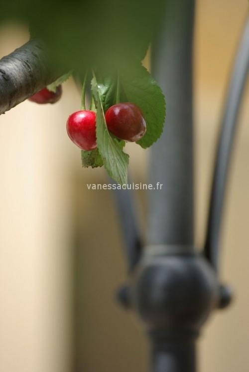 Le temps des cerises - Vanessa Romano photographe culinaire