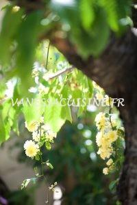 Sous le cerisier - Vanessa Romano photographe et styliste culinaire